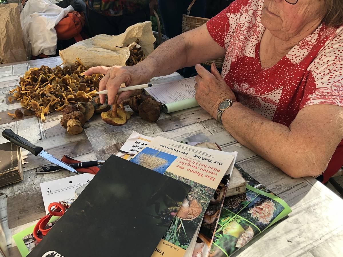 Seit 20 Jahren kontrolliert sie die Pilze der Hobbysammler. (© FM1Today)