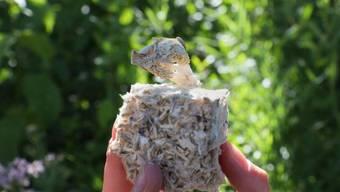 Studierende der ETH Lausanne haben ein Material aus Pilzmyzel und Hanffasern entwickelt. Sie hoffen, dass Pilz-basierte Stoffe dereinst eine Alternative zu Plastik bieten.