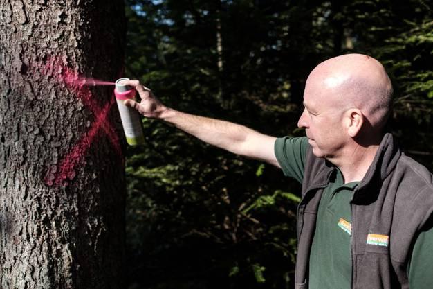 Betroffene Bäume müssen so schnell wie möglich gefällt werden.