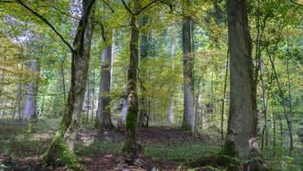 Auf 45 Hektaren Wald im Röserental wird es künftig keine menschliche Eingriffe mehr geben.