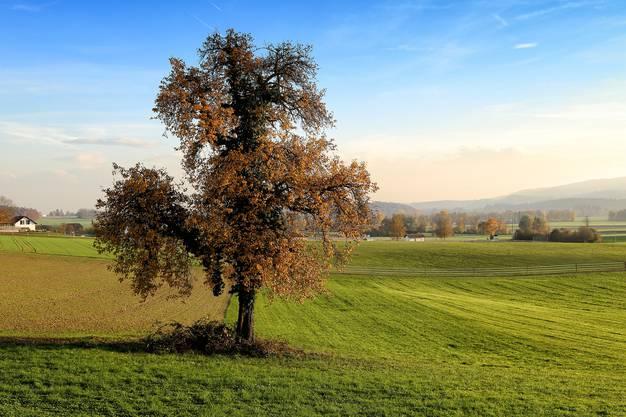 Ein Herbstbaum mit Weitblick.
