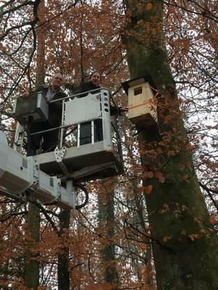 Georg Begert und Franz Wey in luftiger Höhe beim Installieren eines Brutkastens