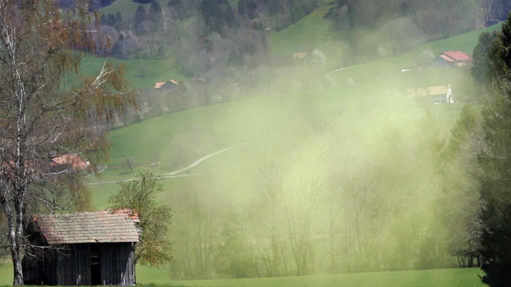 Die aggressiven Birkenpollen sind wieder unterwegs - und vermiesen Allergikern den Frühling. (Archivbild)