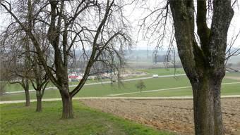 In der Ebene, entlang der Kantonsstrasse 124 zwischen Kallern und Boswil, soll in Zukunft Aushubmaterial deponiert werden.