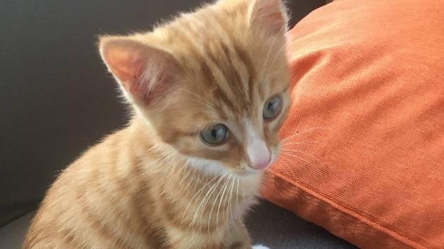 Felix war seit Ende Juli verschwunden.