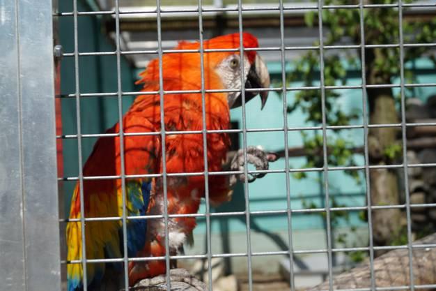 Streifzug durch den Zoo Hasel