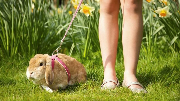 Kaninchen sind beliebte Haustiere. Und gerade im Frühjahr geniessen die Nager den Auslauf im saftiggrünen Gras.