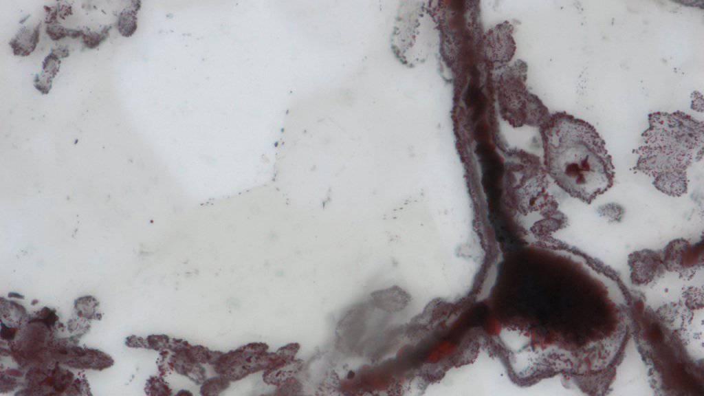 Dieser Fossilienfund wird auf ein Alter von bis zu vier Milliarden Jahre geschätzt