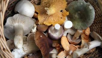 Giftig oder essbar? Dem Pilzkontrolleur sollte immer die ganze Ernte vorgelegt werden. hnp