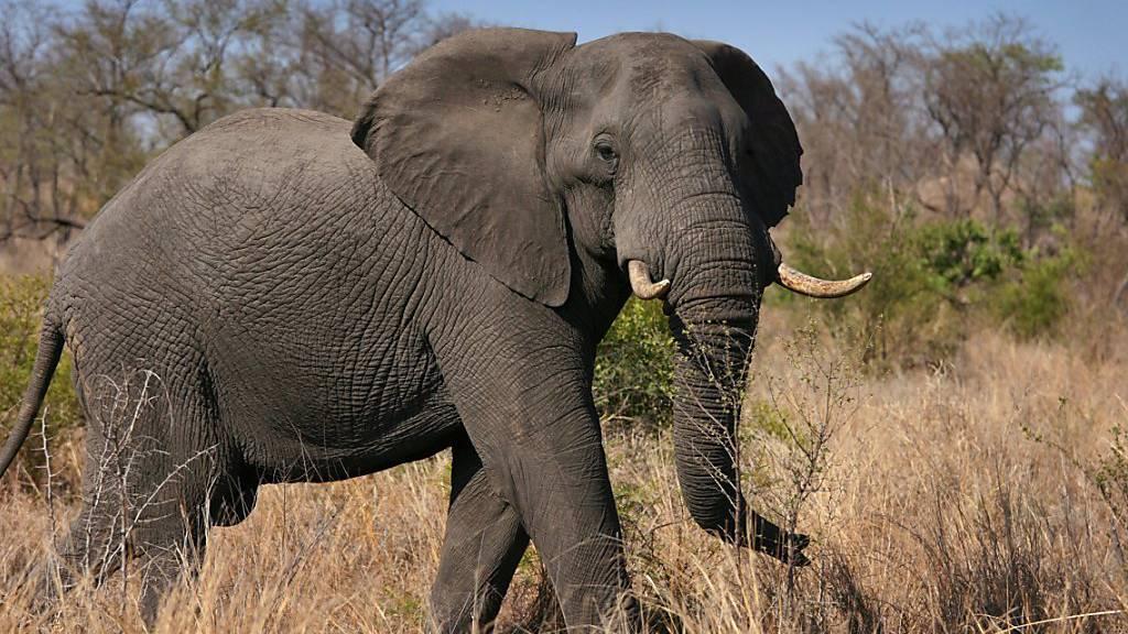 200 Elefanten sterben an den Folgen einer Dürre