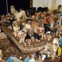 Fälle wie dieser: 2017 wurden in den USA mehr als 170 Yorkshire Terrier und Mischlinge in einem Haus in San Diego entdeckt.