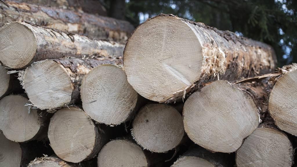 Bündner Behörden ermitteln wegen illegaler Holzverkäufe