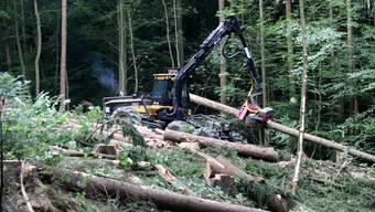 In der kommenden Schlagsaison wird, infolge der schwierigen Marktsituation nach den grossen Sturm- und Käferholzmengen, nur rund zwei Drittel der ordentlichen Jahresnutzung realisiert.