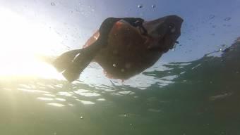 Ein erfrischender Rhyschwumm – über und unter Wasser.