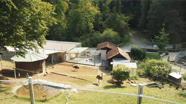 Der Tierpark Bad Zurzach wird von einem Verein geführt. (Archiv)