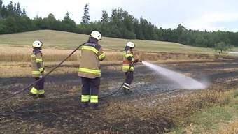 Die heissen und trockenen Temperaturen sorgen für grosse Brandgefahr. In Niedergösgen brannten heute beinahe 10`000 Quadratmeter eines Weizenfeldes ab. Die Brandursache ist noch unklar.