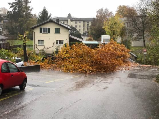 Auch in Döttingen blockierte ein umgestürzter Baum eine Brücke über den Binnenkanal.