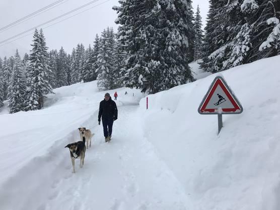 Immerhin die Hunde freuen sich über den vielen Neuschnee.