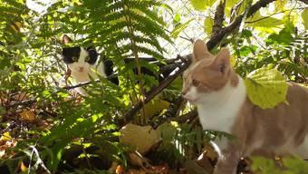 Verletzte Katzen in Hochwald