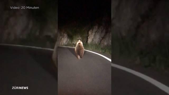Jäger beobachtet Bär im Berner Oberland