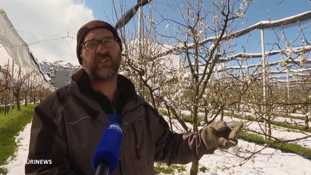 Kälteschock: Der Frost frustriert die Bauern