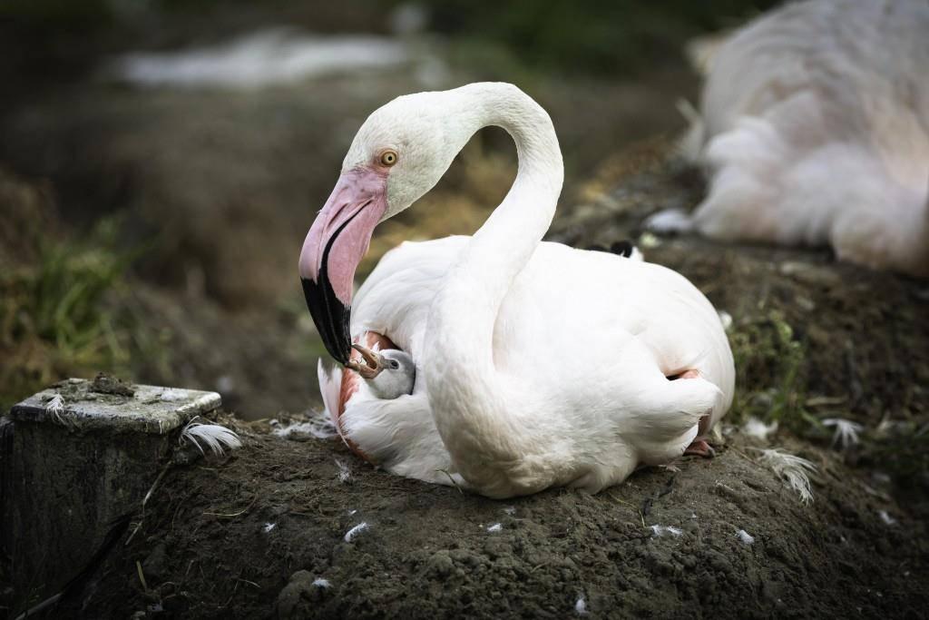 Baby-Flamingo im Walter Zoo (© pd)