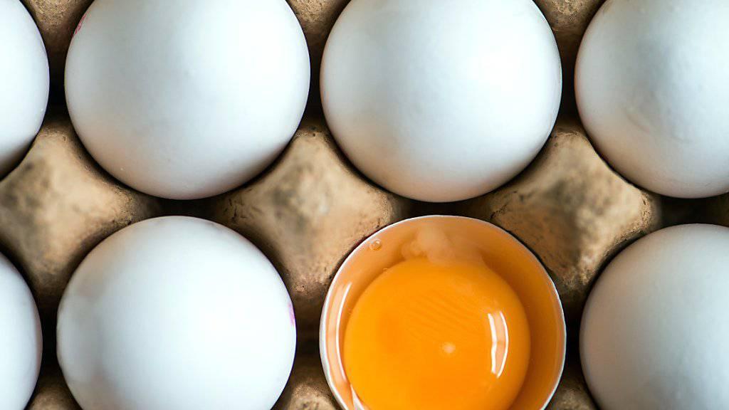 Tierschützer setzen sich im Eier-Skandal für Hühner ein: Sechs Organisationen protestieren am Montag in den Niederlanden dagegen, dass mit dem Insektengift Fipronil belastete Hühner getötet werden. (Symbolbild)
