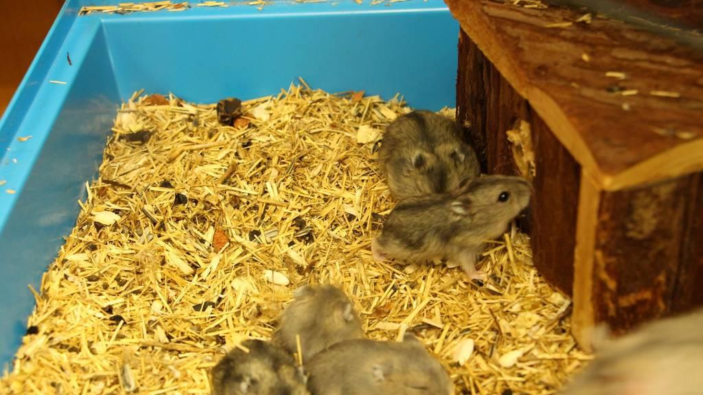 Elf Hamster an Tramhaltestelle ausgesetzt