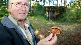 Früher galt der Samtfusskrempling als essbar. Heute entfernen ihne Pilzkontrolleure wie Gianni Mazzucchelli aus den Körben der Sammler.