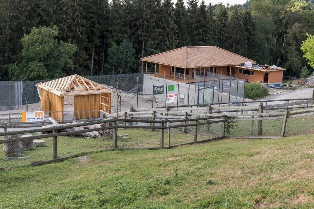 Löwenanlage Walter Zoo (© Walter Zoo AG)