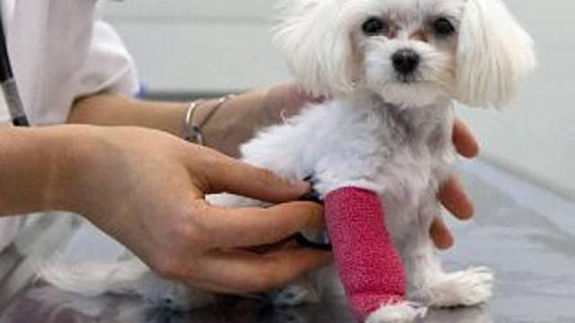 Ein kleiner braver Patient