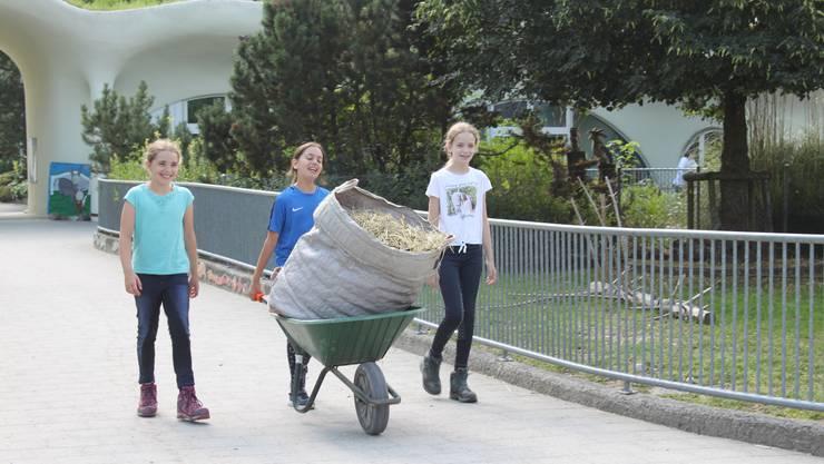 Laura, Sophia und Lena kümmerten sich um die grossen Tiere. Auf den Pferden und Ponys durften sie später reiten.