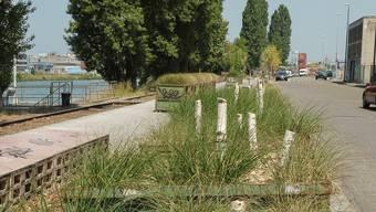 Von den 60 Birken bleiben nur noch die Stümpfe – sauber durchgesägt von der Stadtgärtnerei. Martin Töngi