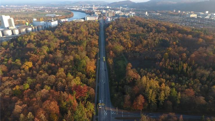 Gegen den Ausbau der Rheinfelderstrasse im Hardwald regt sich Widerstand.