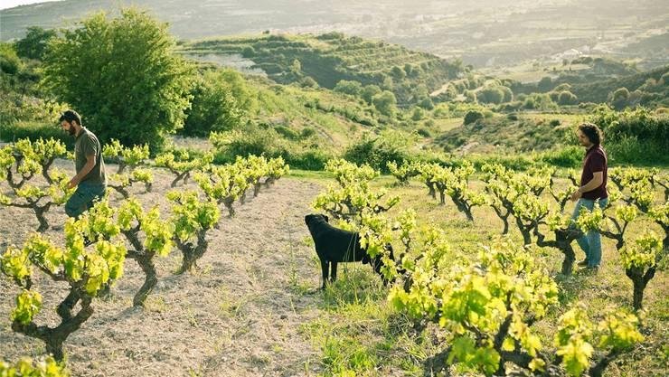 Hier baut Marco Zambartas zypriotische Weine in hoher Qualität an. Die Landschaft mit den Weinbergen ist eindrücklich und geht bis über 1000 Meter ü. M.