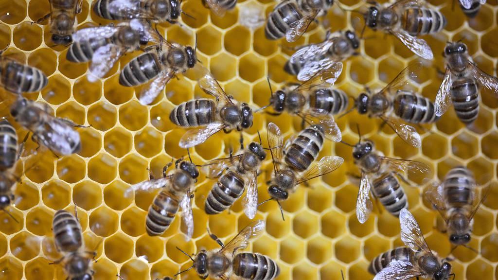 Rekordtief bei Honigernte