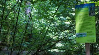 Naturreservat Lägerngrat - seit 15 Jahren wuchert es
