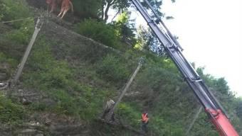 Die Bündner Polizei hilft dem abgestürzten Rind mit einem Kran.