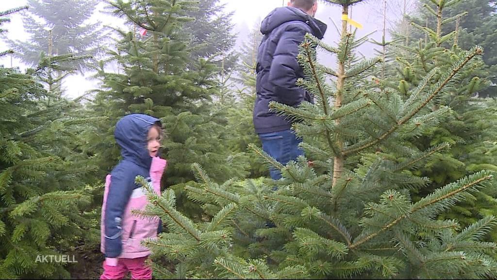 Weihnachtsbaum-Boom aufgrund von Corona