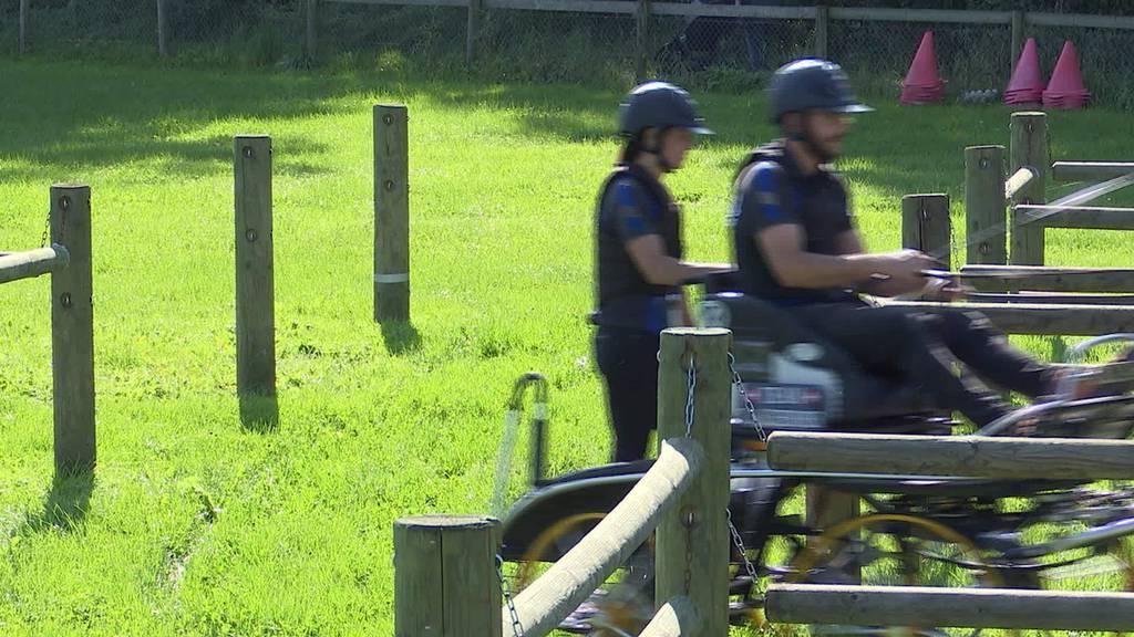 Pony-Gespannfahren: Thurgauer Brüder sind Weltmeister