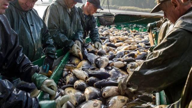 Massnahmen gegen Überfischung beschlossen (Archiv)