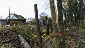 Holzereiarbeiten entlang der Kantonsstrasse von SIssach nach Wintersingen. (Symbolbild)