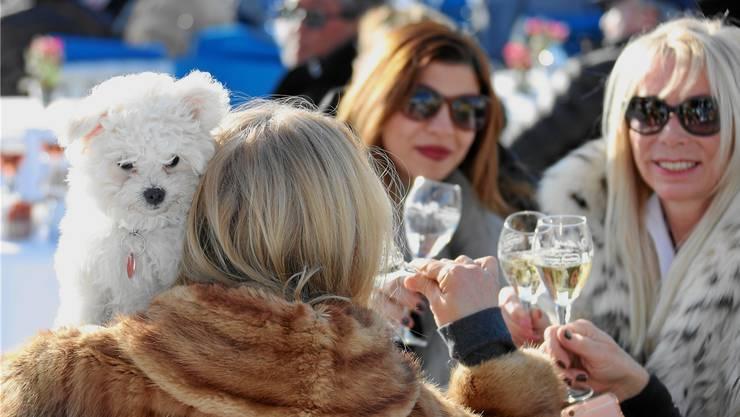 Ob lebendig oder nicht – Pelz ist ein treuer Begleiter der Zuschauerinnen an den Pferderennen in St.Moritz.