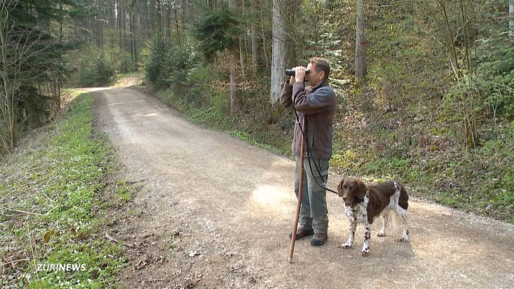 Jagdaufseher fordern Leinenpflicht zum Schutz der Rehe