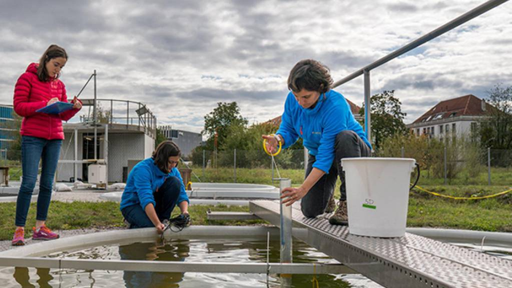 Forscherinnen der Eawag entnehmen Wasserproben aus einem Versuchsteich.
