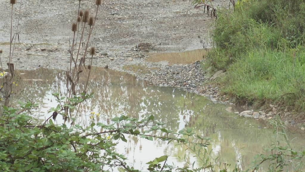 Wegen Amphibien: Umweltverbände kämpfen gegen Motocrosspiste