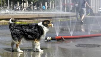 Hundstage en masse in der Schweiz: der Sommer 2019 dürfte der drittheisseste seit Messbeginn werden. (Themenbild)
