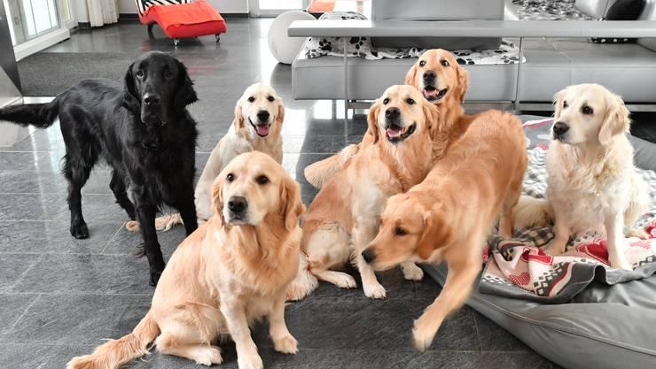 Das Ehepaar hat insgesamt sieben Hunde.