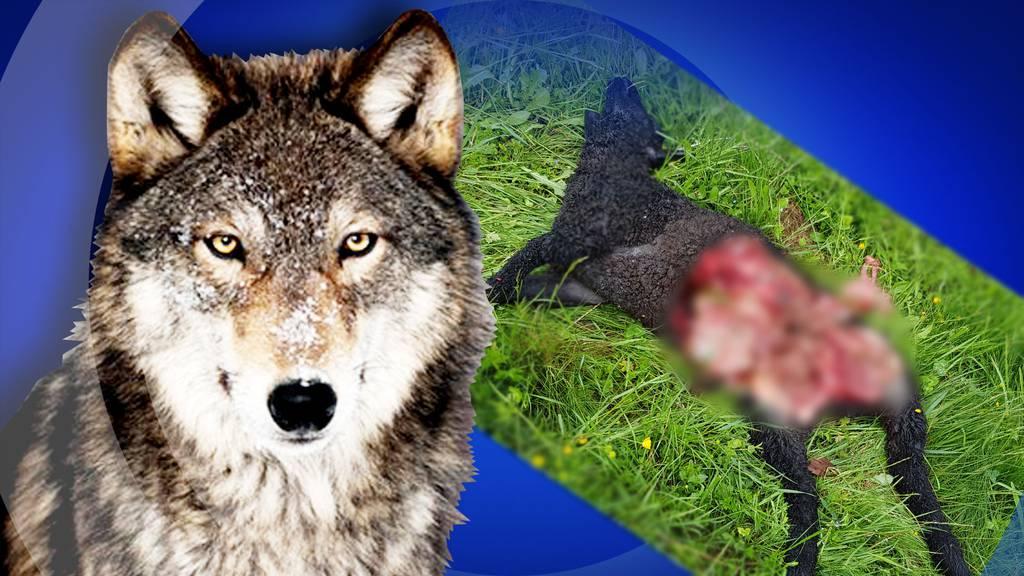 Wolfattacke in Oberdorf
