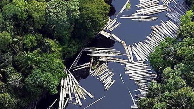 Illegal geschlagenes Tropenholz schwimmt im Amazonas (Symbolbild)